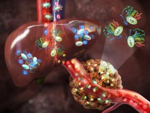 원자력연, 간에 축적되지 않는 나노의약품 개발